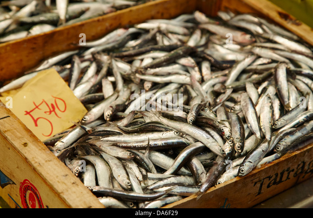 Sardines spain stock photos sardines spain stock images - Stock uno alicante ...