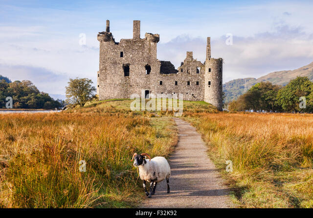 Kilchurn Castle, the path leading to it and a Scottish Blackface ram, Loch Awe, Argyll and Bute, Scotland, UK. - Stock-Bilder