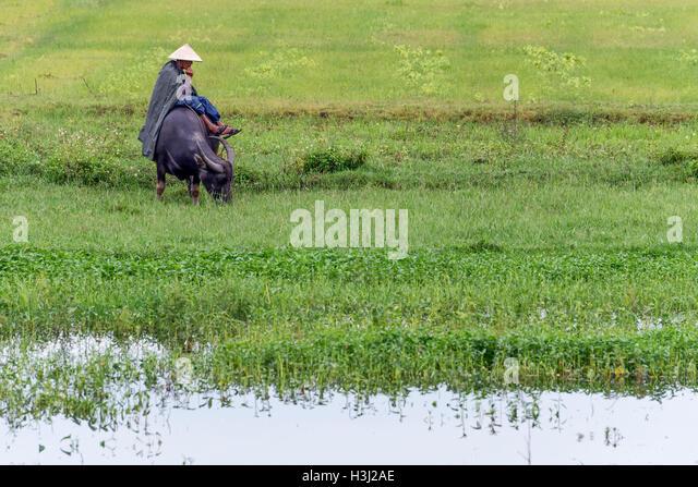 Farmer and his buffalo - Stock-Bilder