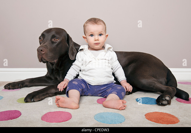 Cute Baby with her Chocolate Labrador Pet - Stock Image