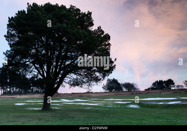 Teignmouth,Devon, England. January 21st 2013.  A lone tree on a golf course in mid winter at sunset with the remains - Stock Image