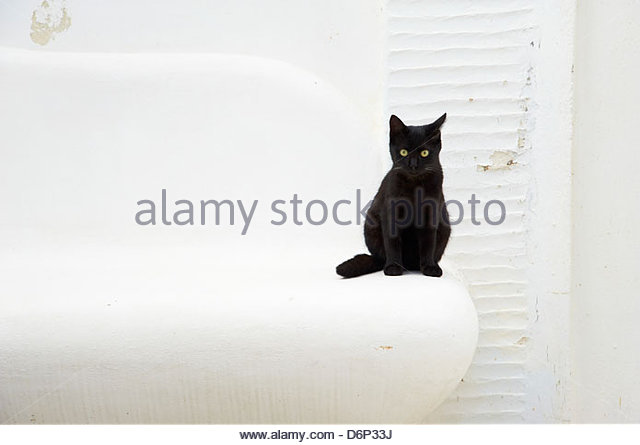 Cat, Pyrgos village, Tinos, Cyclades, Greek Islands, Greece, Europe - Stock Image