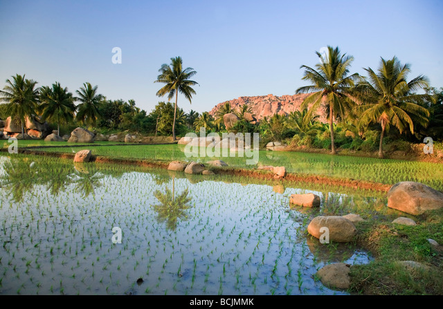 Rice Fields, Hampi, Karnataka, India - Stock Image