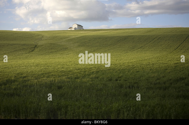 A white house sits in a wheat field in Arcos de la Frontera, Cadiz Province, Spain, March 18, 2008. Photo/Chico - Stock Image
