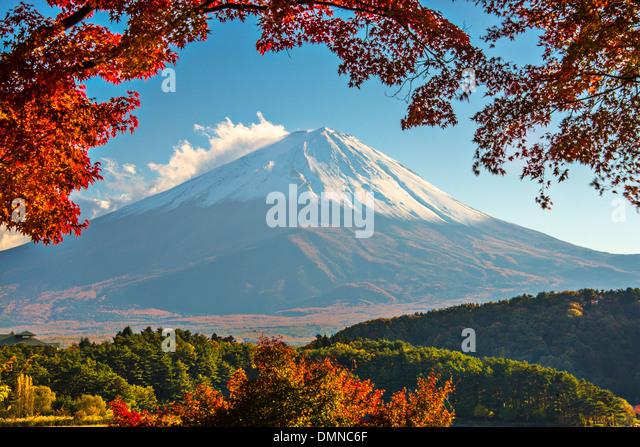 Mt. Fuji with fall Foliage in Japan. - Stock Image