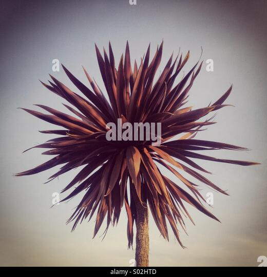 Palm tree - Stock-Bilder