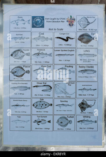 Notice at the end of Clevedon Pier showing types of fish caught by local sea angling club - Stock Image