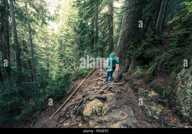 Rear view of female hiker moving down steep mountain forest, British Columbia, Canada - Stock Image