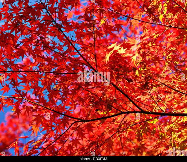 Fall foliage leaves and branches - Stock-Bilder