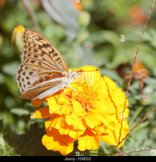 butterfly on yellow color - photo #44