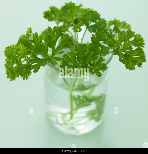 Parsley in glass jar - one of a series of herb images - Stock Image
