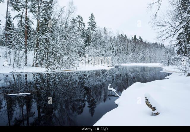 Lilla Kedjen lake at Ekopark Farna (Farna Nature Park) in central Sweden during winter with trees and lake side - Stock Image