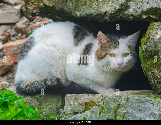 The cunning cat hides among the stones - Stock Image