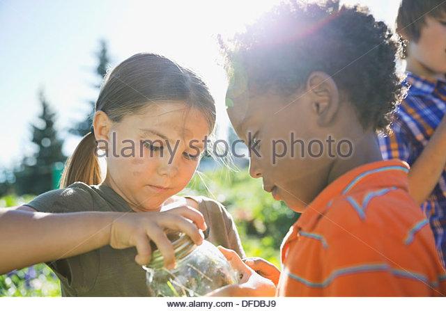 Children catching garden bugs in jar - Stock Image