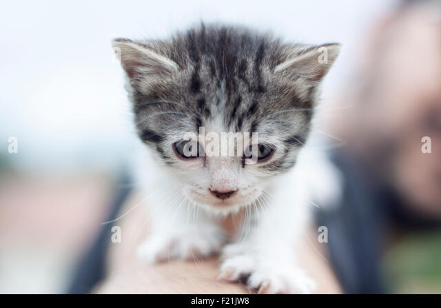 a horizontal view of a tiny cat looking at front - Stock-Bilder