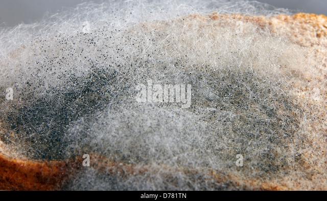 Rhizopus Stock Photos & Rhizopus Stock Images - Alamy
