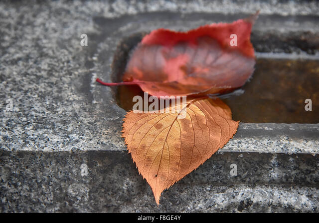 Life and Time - Stock Image
