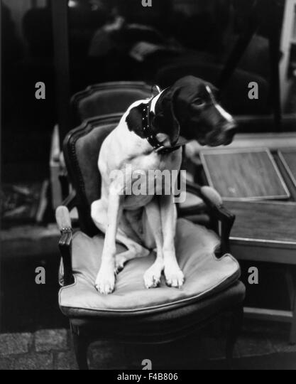 black and white catalogue 2 chair defocused dog domestic animals one animal outdoors pet Swedish catalogue 3 vertical - Stock-Bilder