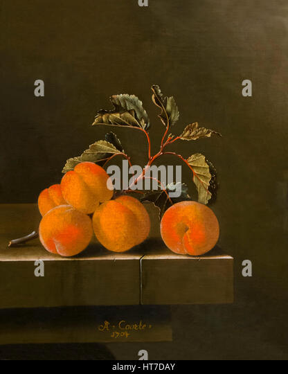 Still Life with Five Apricots, by Adriaen Coorte, 1704, Royal Art Gallery, Mauritshuis Museum, The Hague, Netherlands, - Stock Image