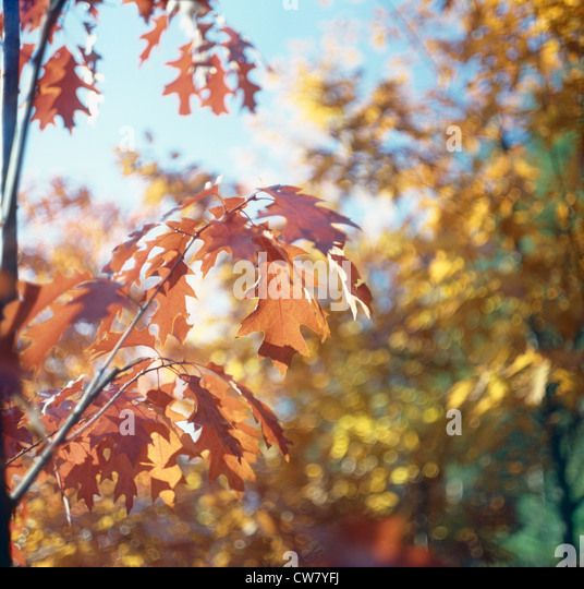 Autumn. - Stock-Bilder