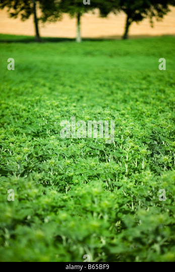 Lush vegetation, close-up - Stock Image