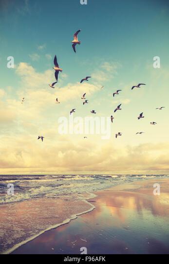 Vintage stylized flying birds above a beach at sunset. - Stock-Bilder