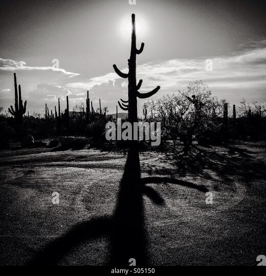 Shadow of a saguaro cactus. - Stock Image