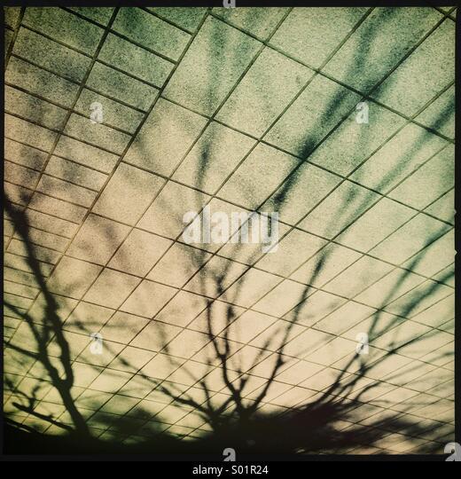 Tree shadows on sidewalk - Stock Image