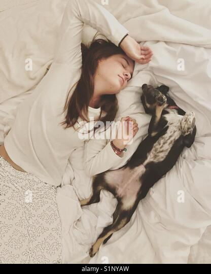 Doggyfied - Stock Image