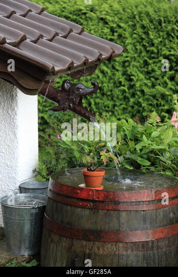 old wooden wine barrel (water butt) in garden collecting rainwater during severe rainfall. Germany. Photo by Willy - Stock Image