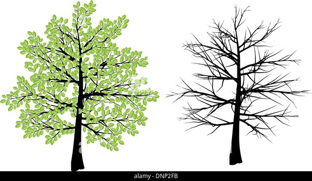 Tree illustration depicting spring and winter - Stock Image