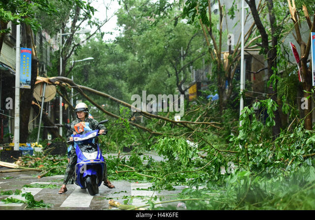 Qionghai, China's Hainan Province. 18th Oct, 2016. Branches are broken in typhoon-hit Qionghai City, south China's - Stock Image