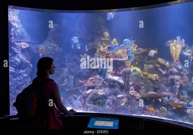 Aquarium in Loro Parque, Puerto de la Cruz, Tenerife, Canary Islands, Spain - Stock Image