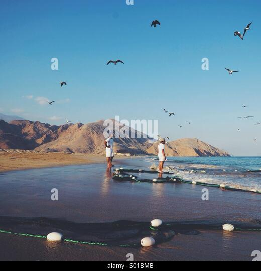Sea Life. Dibba, Oman. - Stock Image