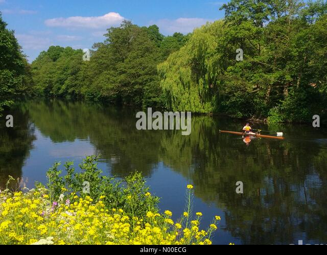 Derby, UK. 25th May, 2017. UK Weather. Rower enjoying a warm afternoon on the River Derwent at Darley Abbey in Derby - Stock Image