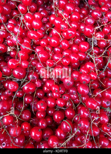 Red Currants or Redcurrents - Stock Image