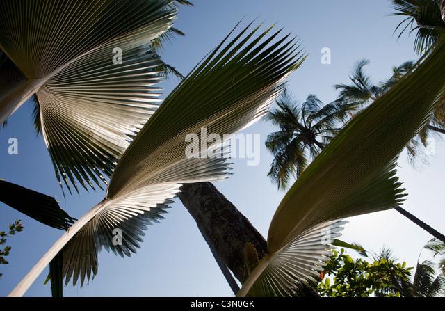 Indonesia, Island Bali, near Tejakula village. Leaves in garden. - Stock Image