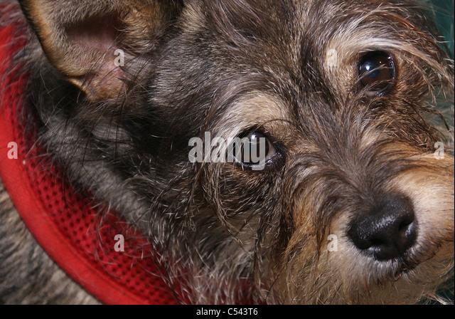 Cute dog face - Stock Image