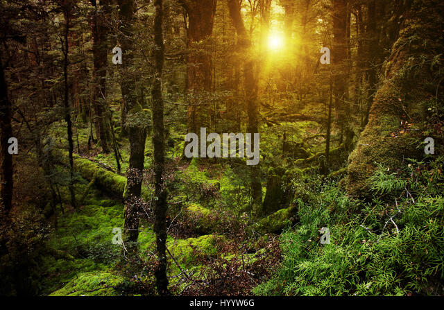 Dark mysterious forest in New Zealand - Stock Image