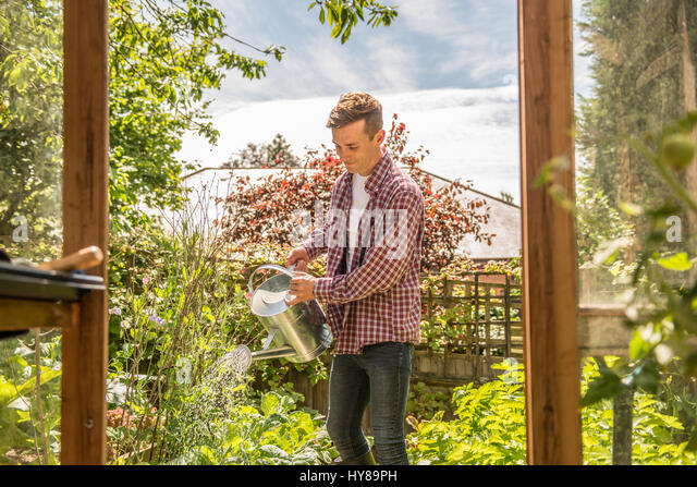A young male gardener works in his allotment - Stock Image