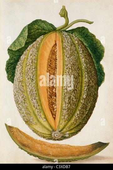 Melon, by Jacques Le Moyne de Morgues. France, mid-16th century - Stock-Bilder