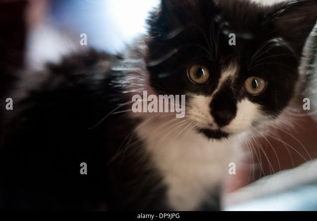 Downham Market Cat Rescue
