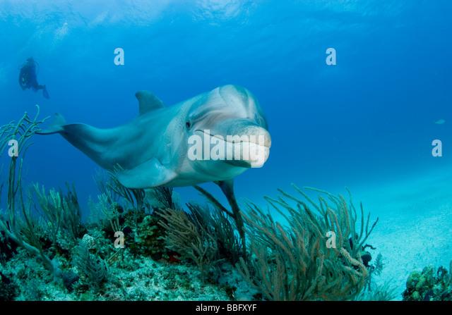 Marine mammal anatomy
