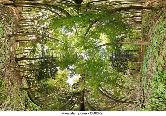 carolinian-forest-showing-canopy-underst
