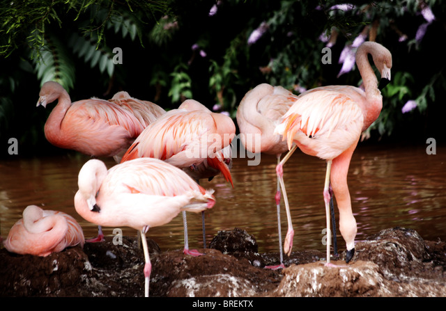 flamingos - Stock-Bilder