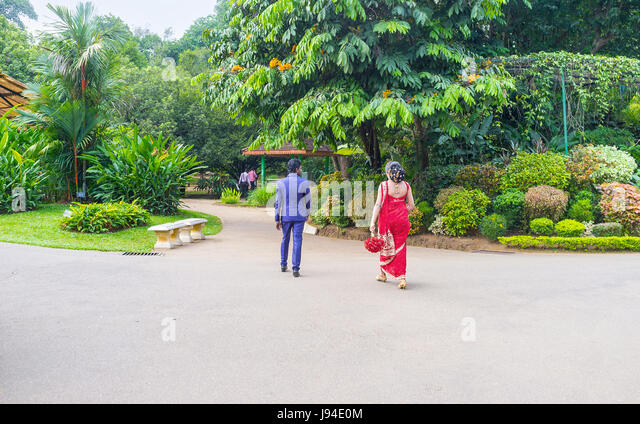 KANDY, SRI LANKA - NOVEMBER 28, 2016: The newlyweds in traditional wedding costumes walk in Royal Botanical Garden, - Stock Image