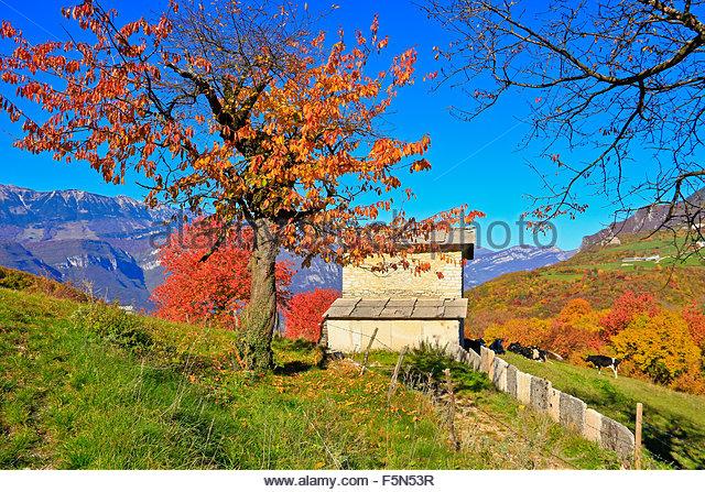 Landscape autum colours, trees, mountains. Fosse lessinia Vneto Italy - Stock Image