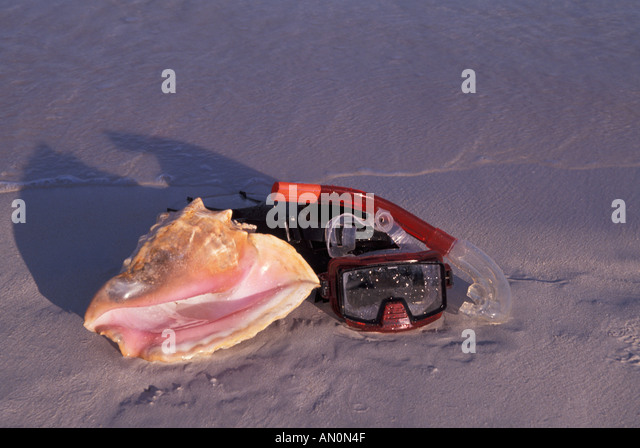 Tropics tropical mask snorkel conch shell beach end of day low slanting sun light - Stock Image