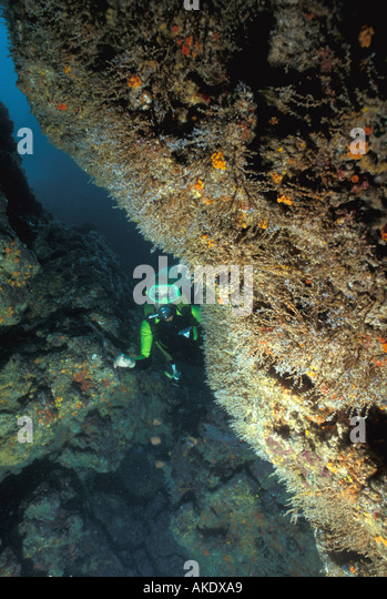 Republic of Panama scuba diver beside coral covered rock caribbean - Stock Image