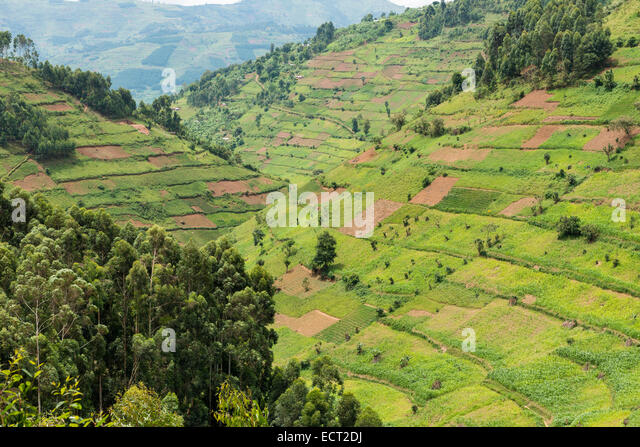 Cultivated fields on slopes, Uganda - Stock Image